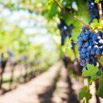 フランスの銘醸地!ボルドーワインの特徴や歴史