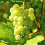 赤・白ワインともに有名な銘醸地!ブルゴーニュワインの特徴や歴史